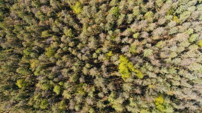forest from above by drone