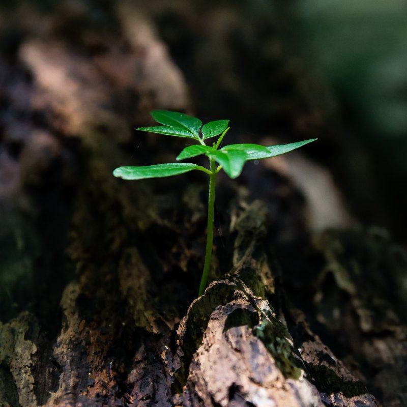 small tree sapling